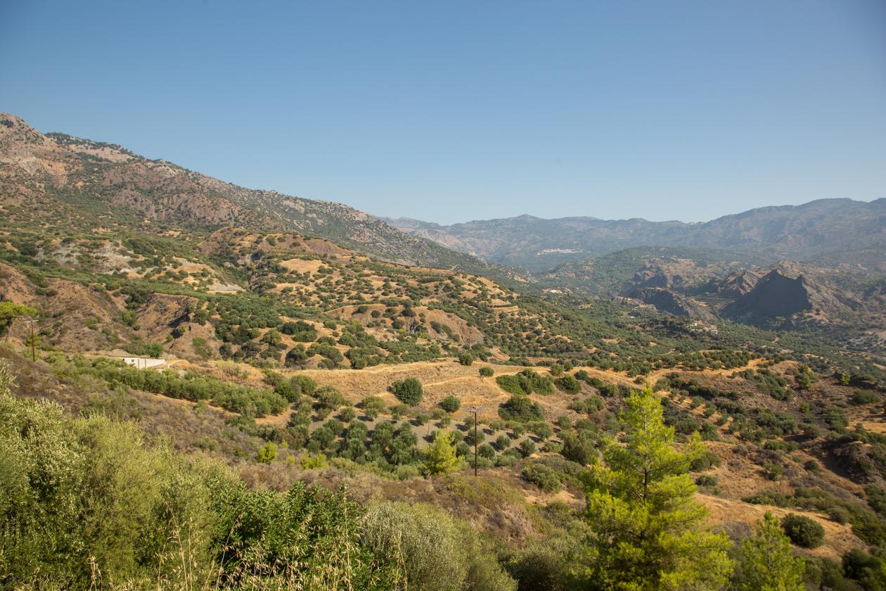 kreta-heuvelachtig-landschap-met-olijfbomen