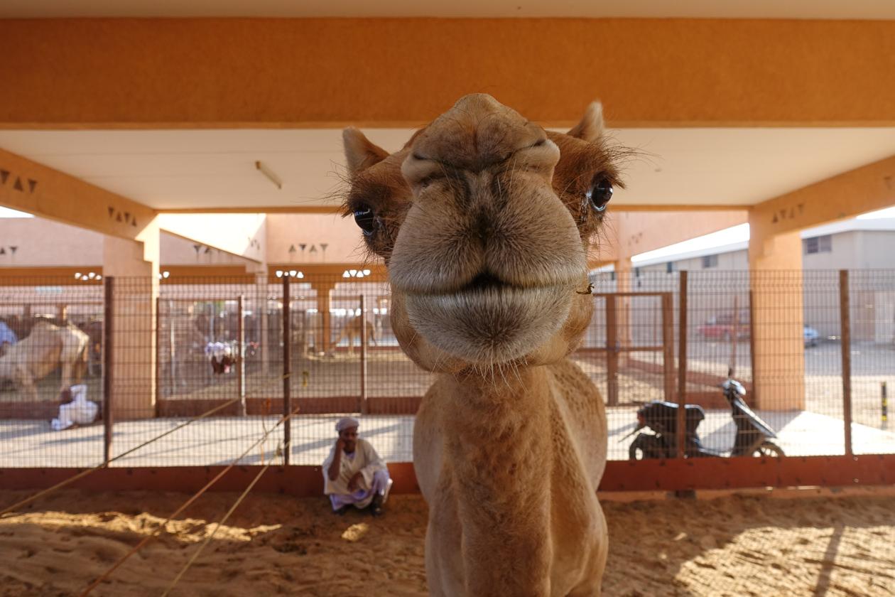 al-ain-al-kameel