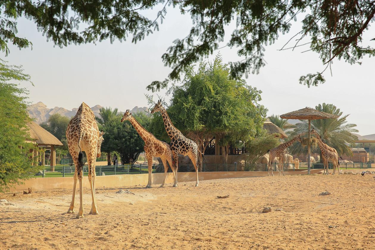 al-ain-dierentuin