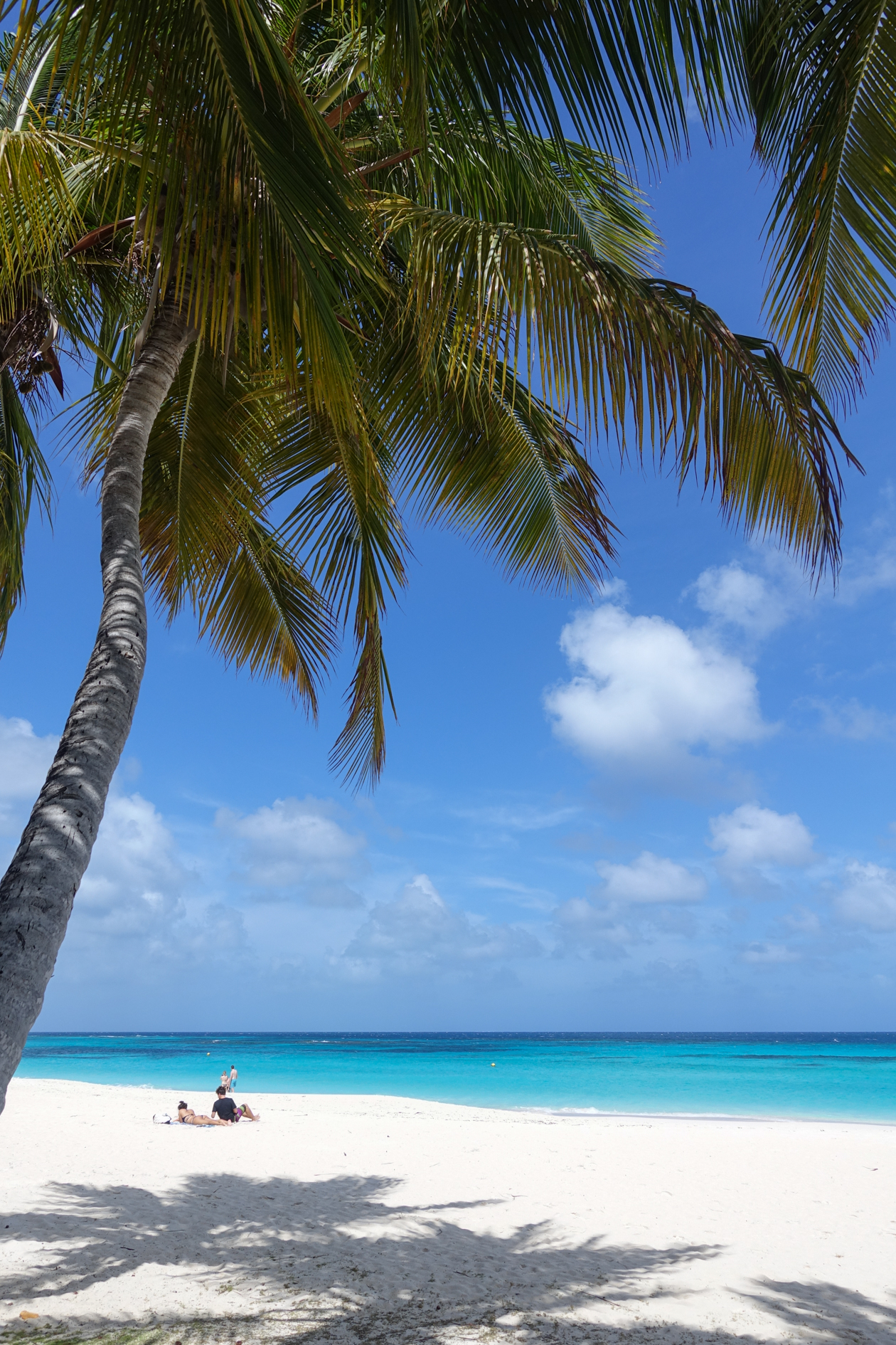 anguilla-shoal-bay3-palmen-en-strand
