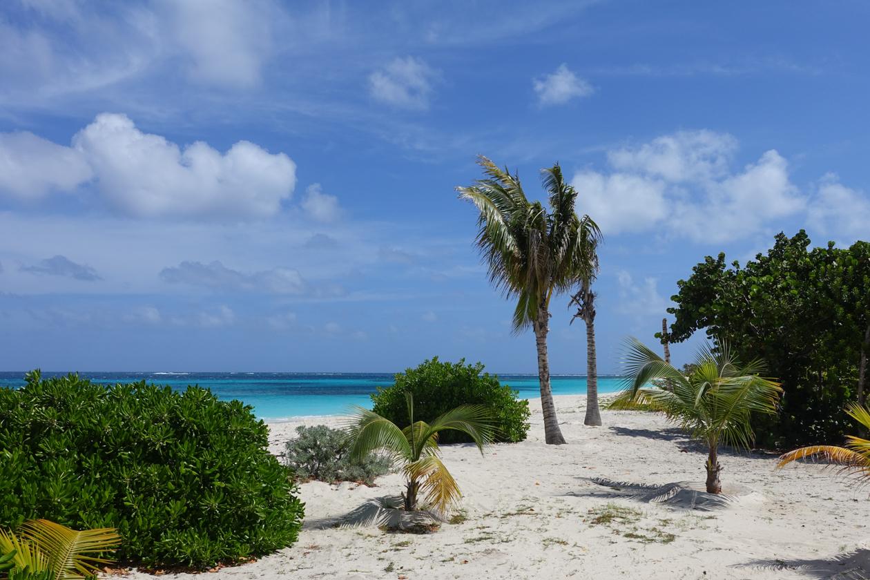 anguilla-tropische-fauna