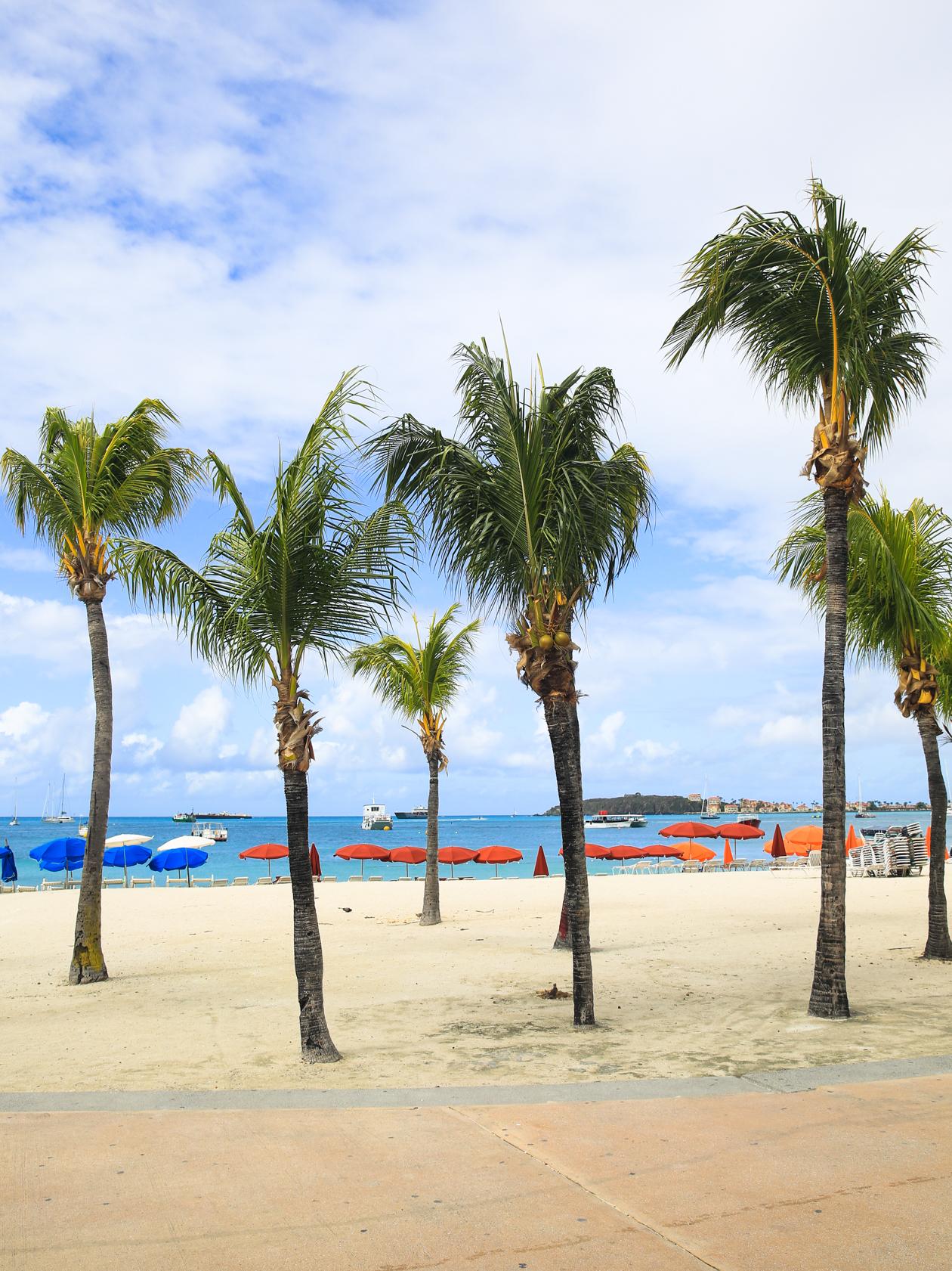 philipsburg-palmbomen