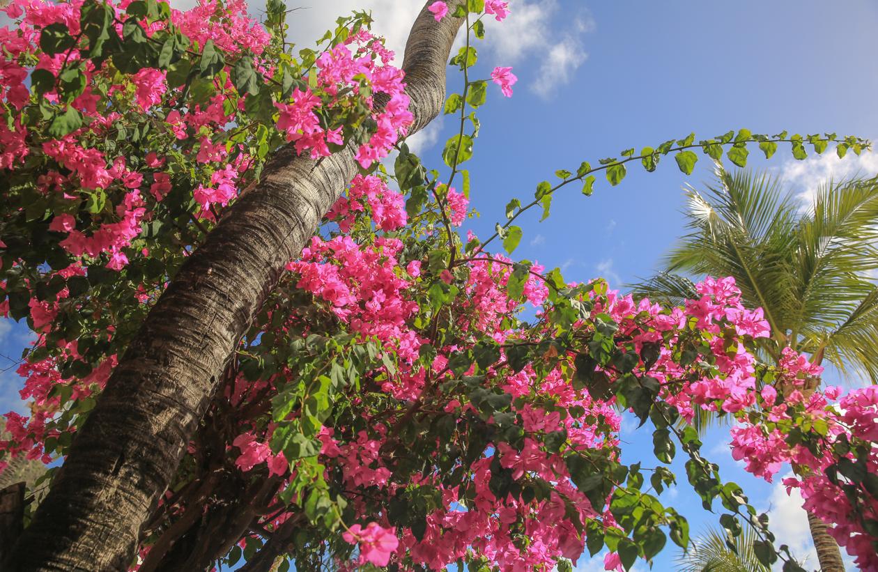 sintmaarten-bloemen