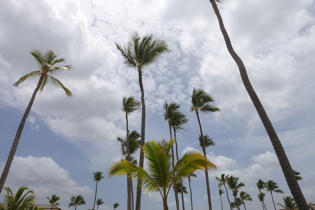 puntacana-palmbomen1
