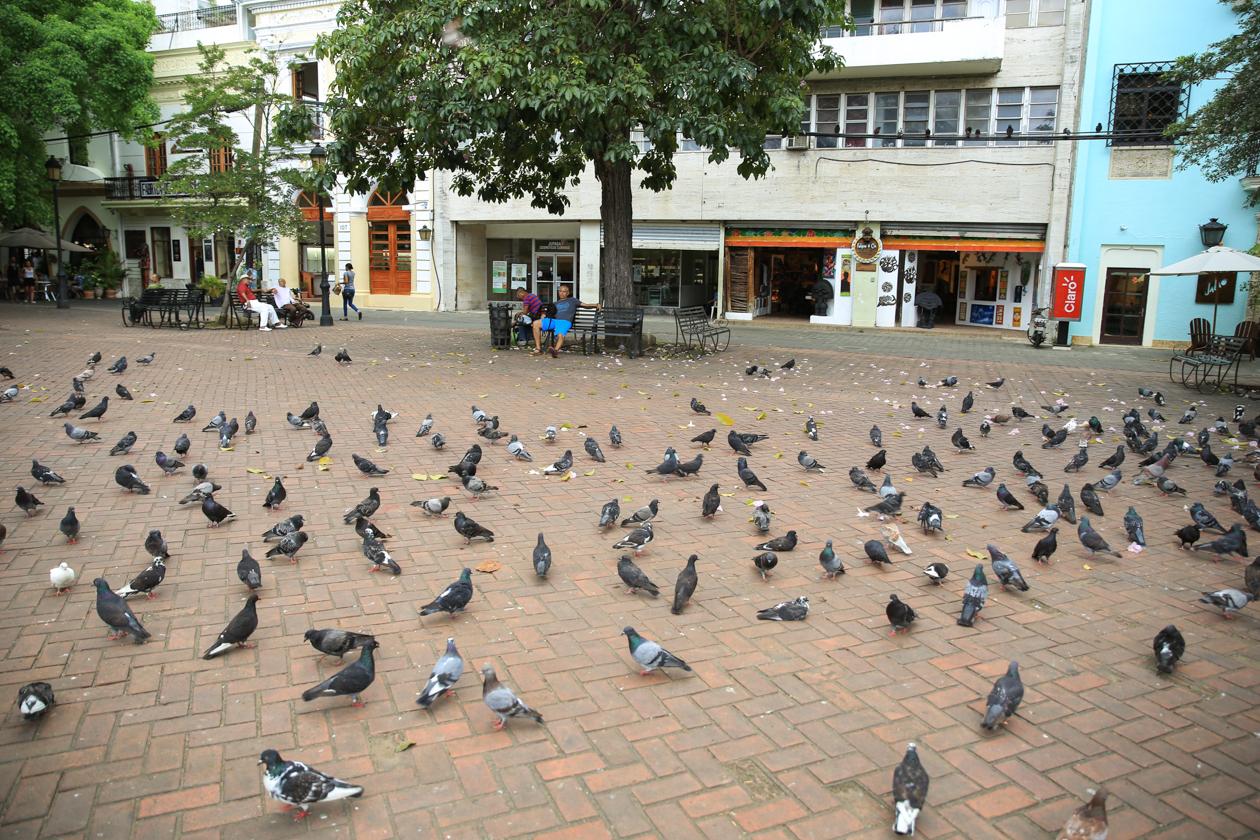 santodomingo-duiven