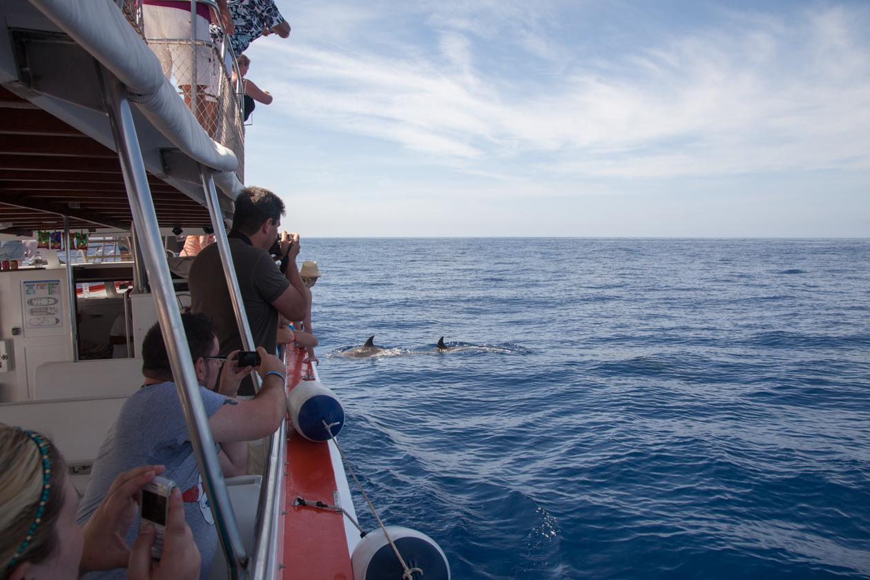 grancanaria-dolfijnen-spotten
