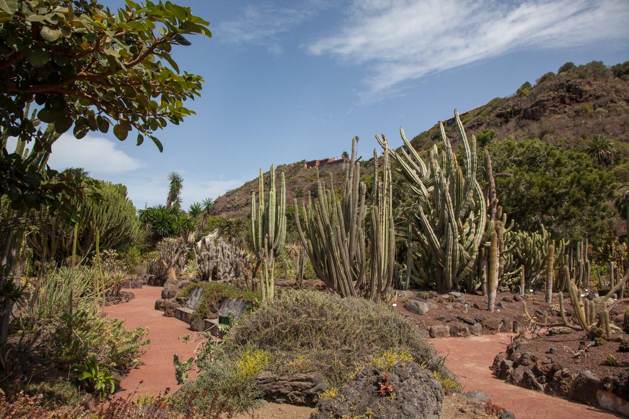 grancanaria-jardin-botanico