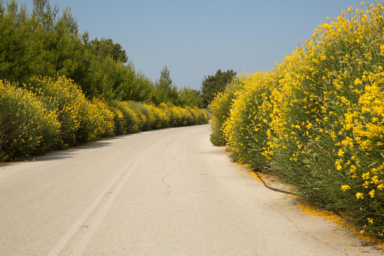 rhodos-bloemen-langs-de-weg