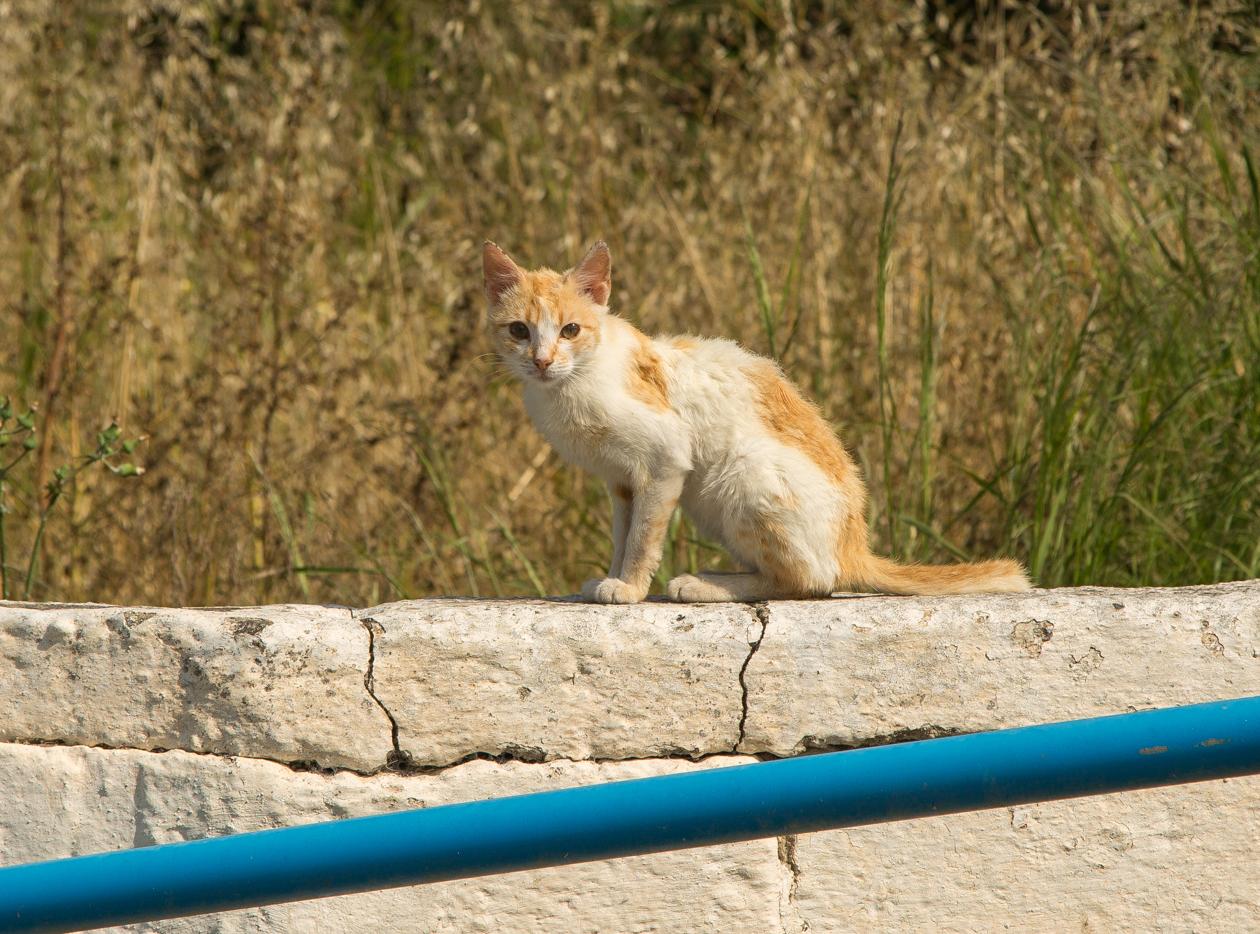 rhodos-katten