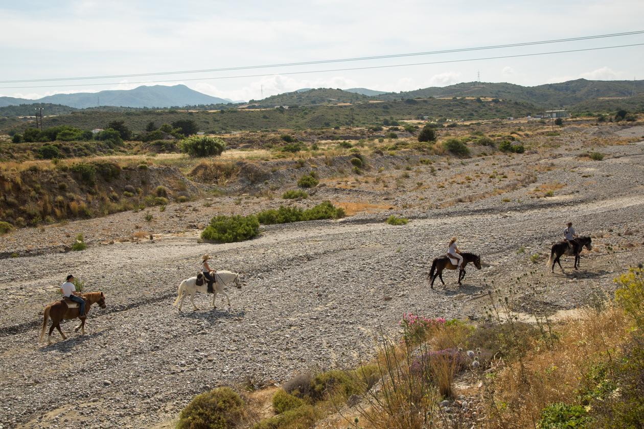 rhodos-paarden