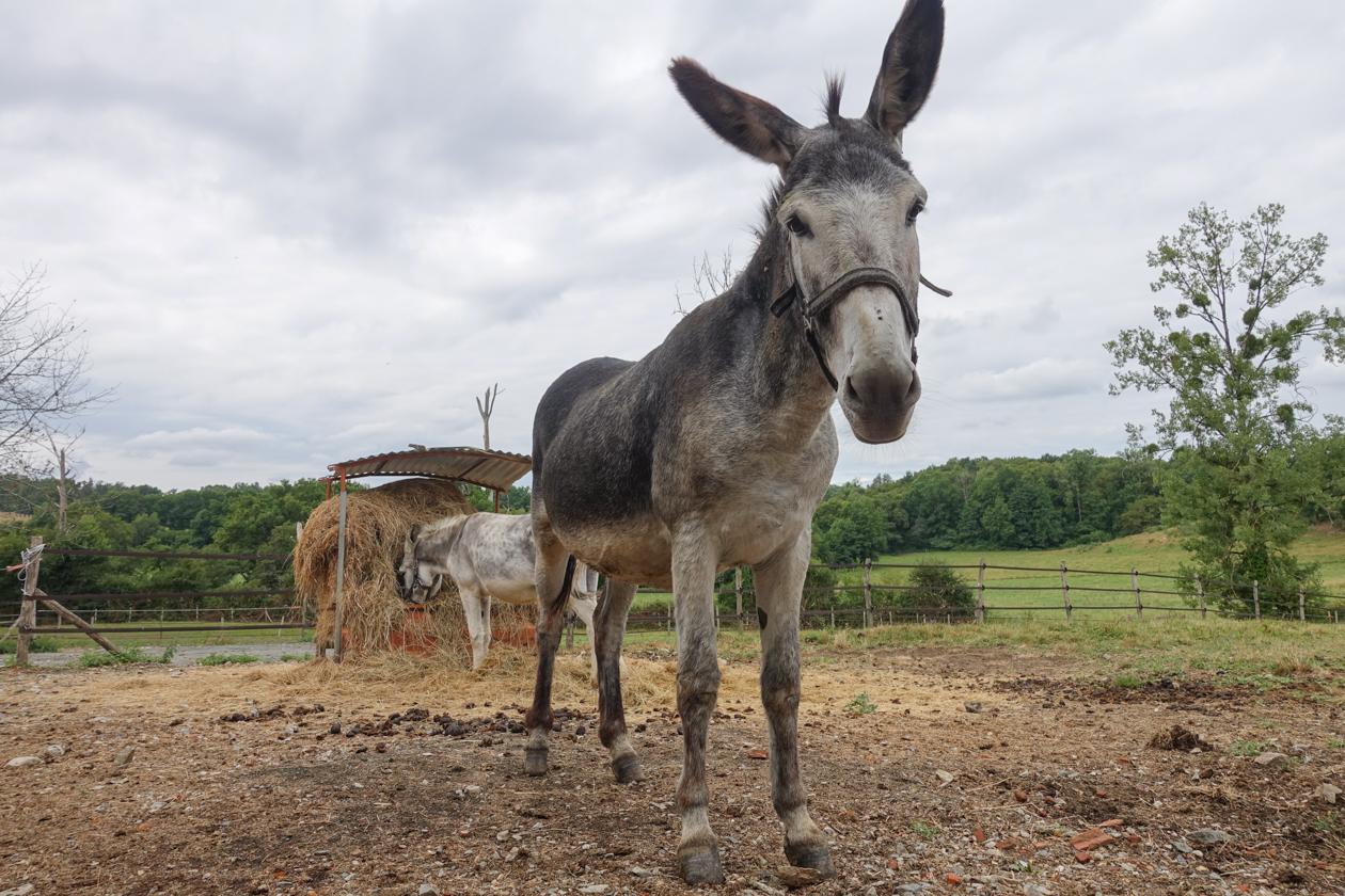 lafragne-ezel