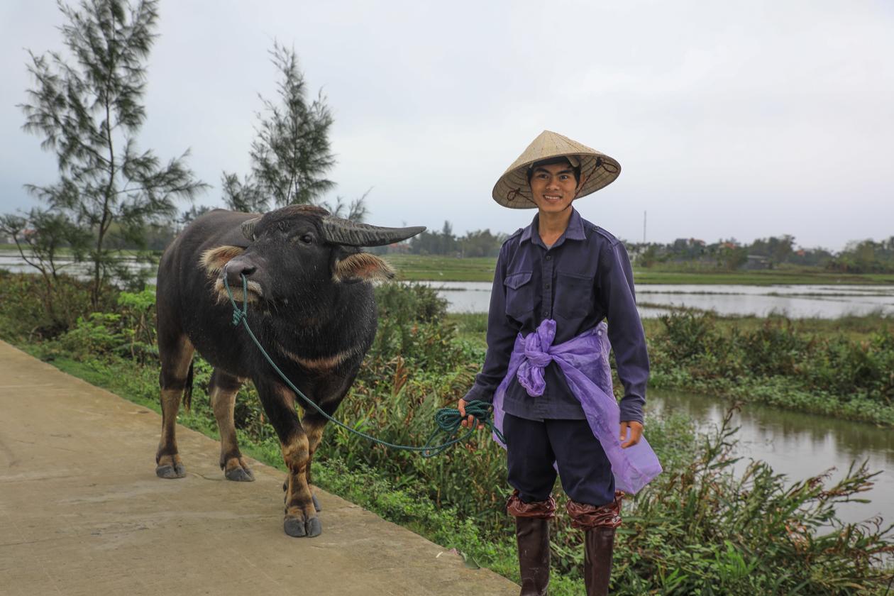 vietnam-boer-met-rund