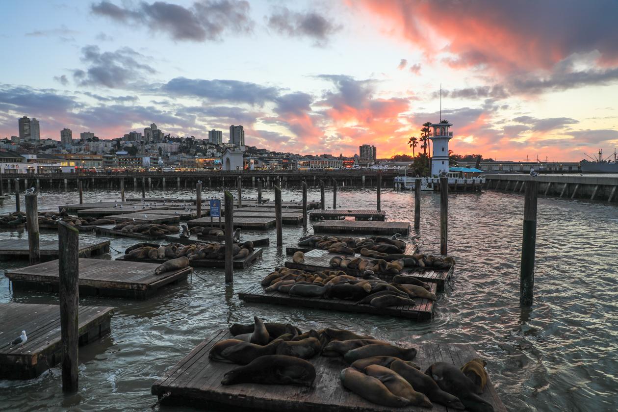 sanfrancisco-zeeleeuwen-pier39