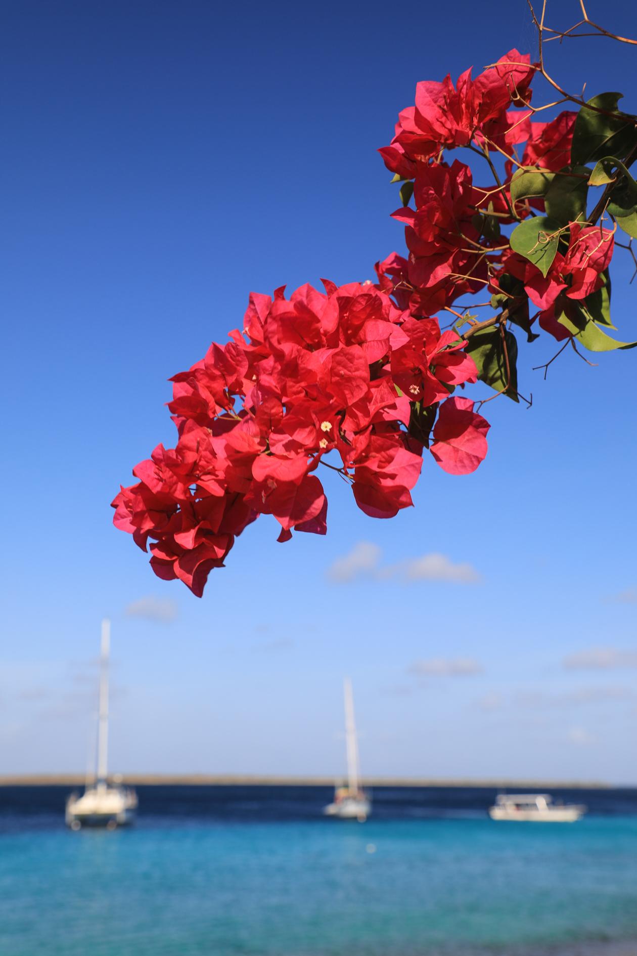 bonaire-bloemen
