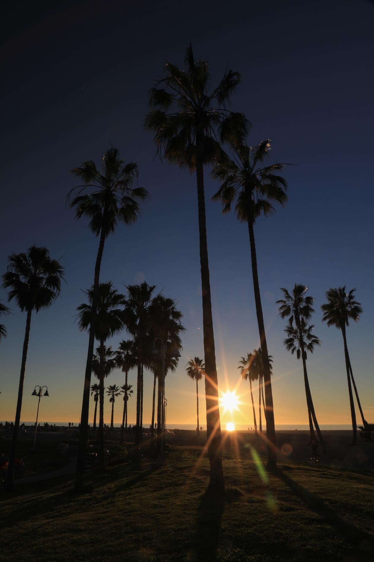 losangeles-palmbomen