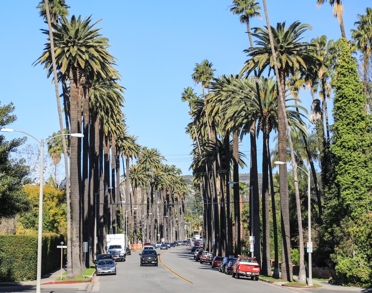 losangeles-palmen-van-beverly-hills