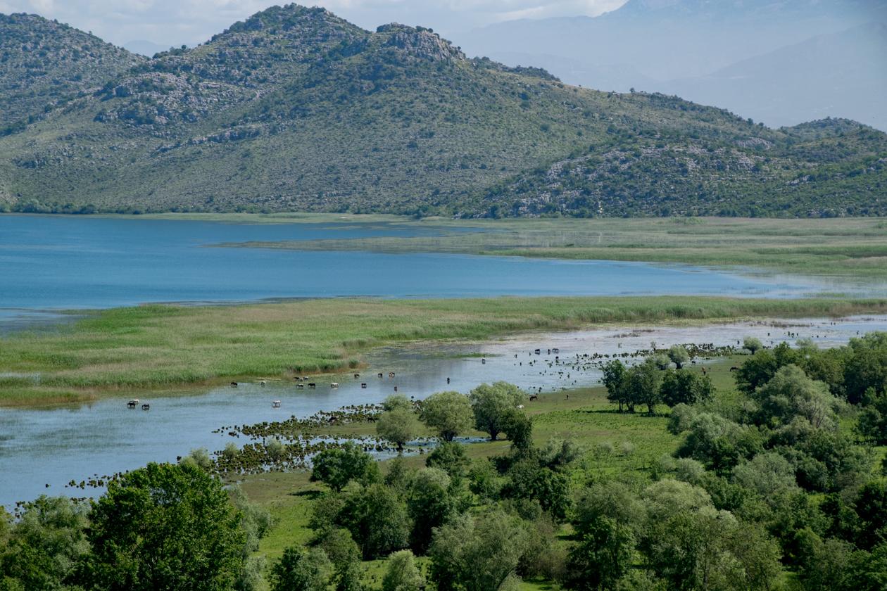 skadarsko-jerezo-nationaal-park