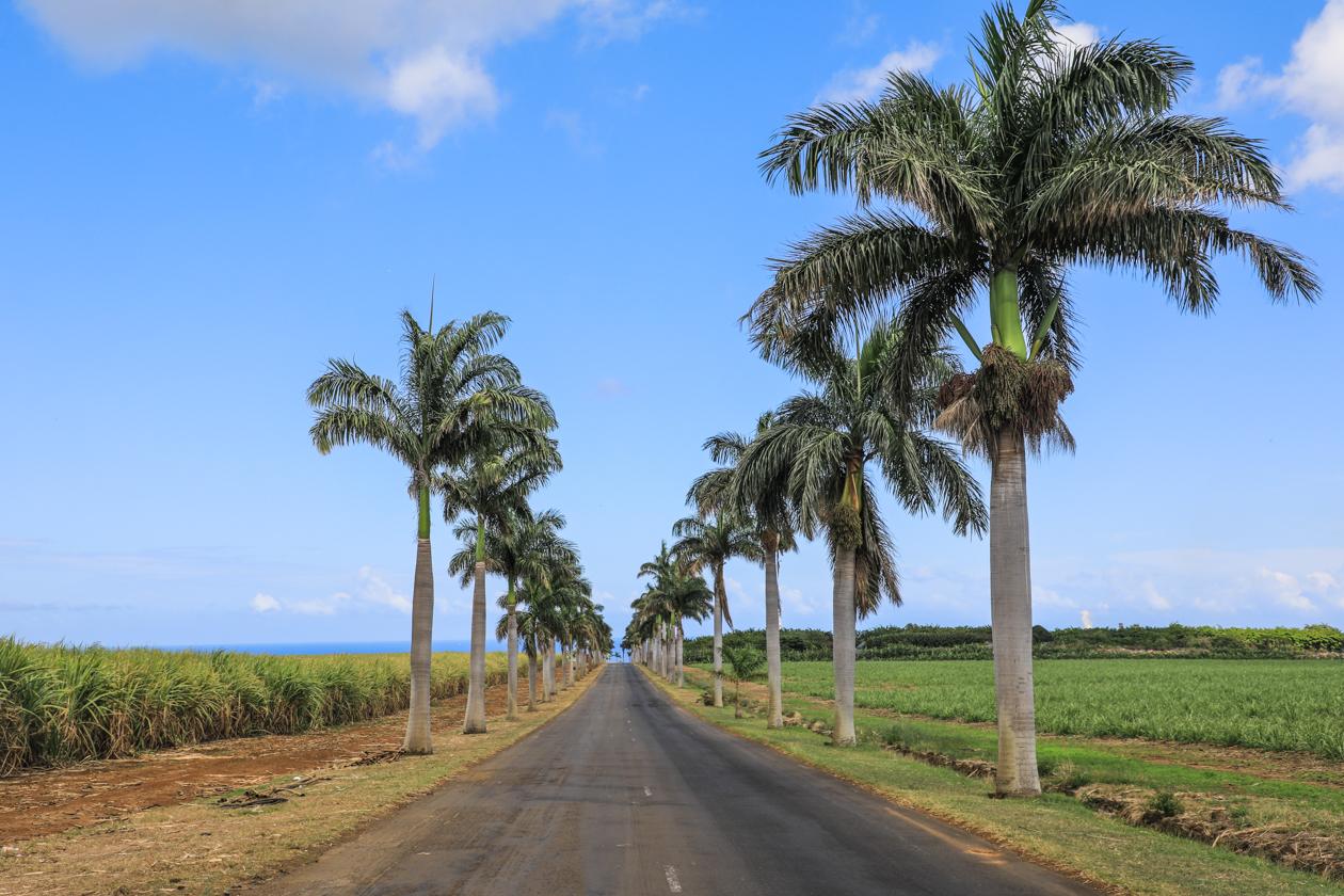 mauritius-landschap-westkust