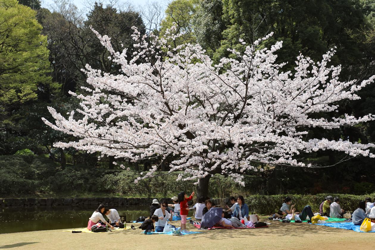 tokyo-picknick
