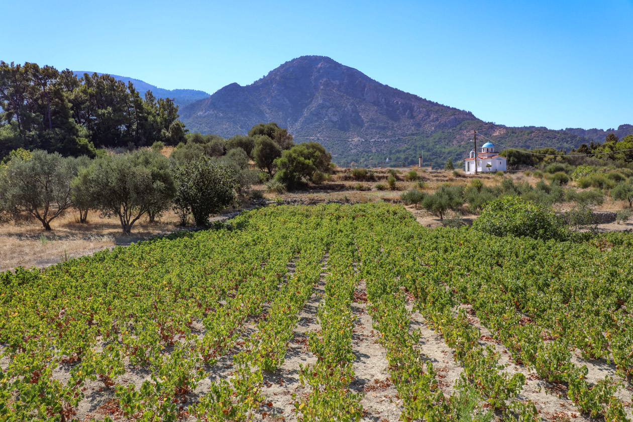 samos-wijnranken-en-olijfbomen